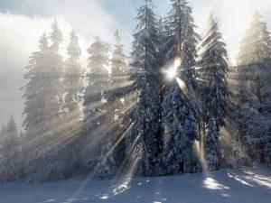 Sonnenstern im Winter