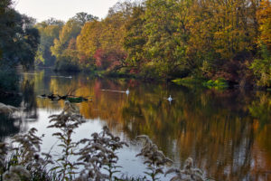 November 2012 · Herbst in der Robertsau (F)
