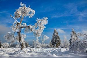 Januar 2013 · Schneebaum