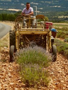 Lavendelbauer bei der Ernte