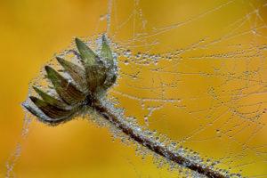 Oktober 2018 · Spinnwebe