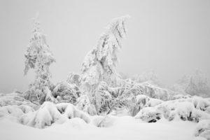 Schneepracht
